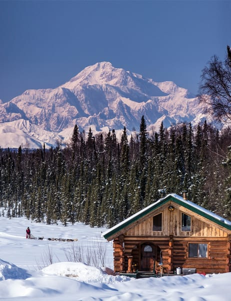 Dog musher Martin Buser runs his team during a spring training run on a lake with Mt. Mckinley and Alaska Range in the background and log cabin in foreground.   Southcentral, Alaska  MR2013-03-23BuserMartin / PR2013-03-23SchorrJim Cabin