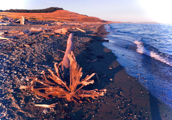 Roots And Light Art | Friday Harbor Atelier