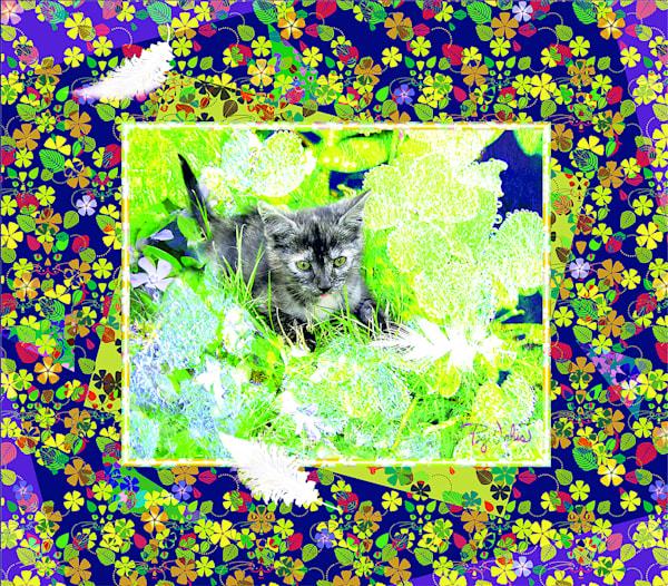 Kitten With Feather Art | Cincy Artwork