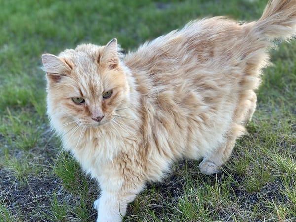 Kiki The Cool Cat Photography Art | Visionary Adventures, LLC