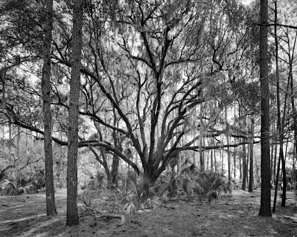 Oak Tree, Ossabaw Island, Georgia Photography Art | Rick Gardner Photography