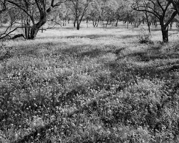 Wild Flowers, Campwood, Texas Photography Art | Rick Gardner Photography