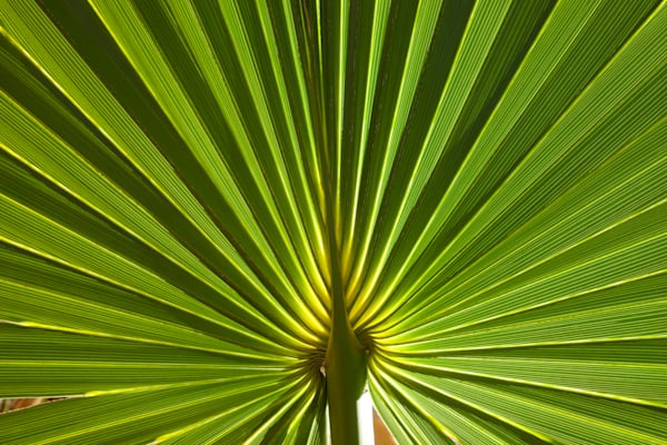 Palmetto Photography Art | Rick Gardner Photography