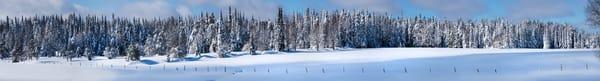 Winter Tug Hill Frozen Trees  Photography Art | Kurt Gardner Photogarphy Gallery