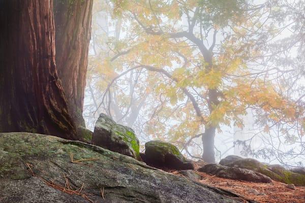 Fall Whisper Photography Art | Charlotte Gibb Photography