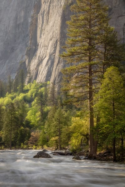 Springtime In Yosemite Photography Art | Charlotte Gibb Photography