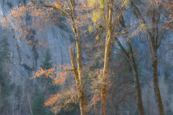 Black Oaks And Blue Shadows Photography Art | Charlotte Gibb Photography