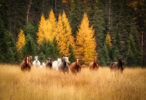 Running Herd of Horses