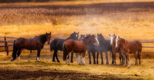 Draft Horses 1 Of 1 Photography Art | Charles Schmidt Photography, LLC
