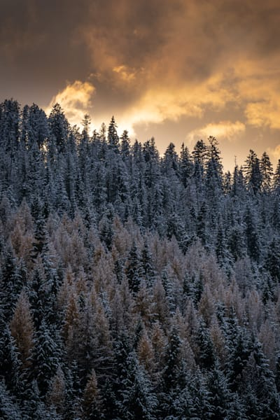 Tom Weager Photography - Shades of golden light