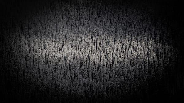Tom Weager Photography - The trees have eyes