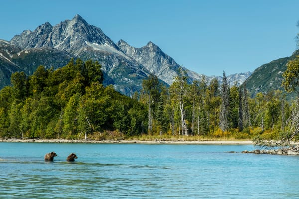 Grizzly bears in Crescent Lake in Lake Clark National Park with Chigmit Mountains background  Alaska Range.  early fall landscape.