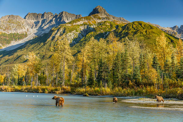 Alaskan Brown (Grizzly) Bear sow and spring cubs on Crescent River with Chigmit mountains in Lake Clark National Park.  Fall - Autumn.  Alaska  Photo by Jeff Schultz/  (C) 2019  ALL RIGHTS RESERVED