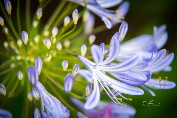 Emergence Photography Art | Casey Chinn Photography LLC