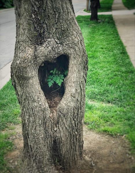 tree-heart, photograph, lost-valentine