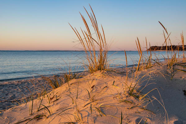 Dune Grass Photography Art | The Colors of Chatham