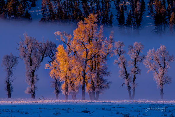 Twenty Below In The Lamar Valley Photography Art | John Winnie Jr. Photography