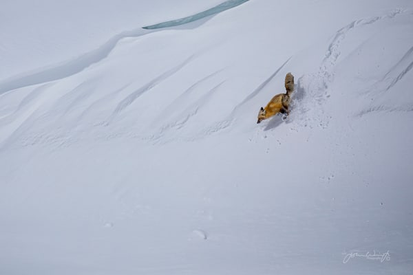 Red Fox Cornice Surfing Photography Art | John Winnie Jr. Photography