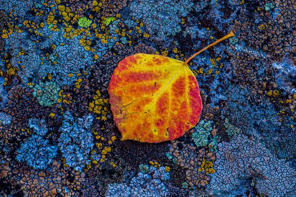 Fall Fire Photography Art | John Winnie Jr. Photography
