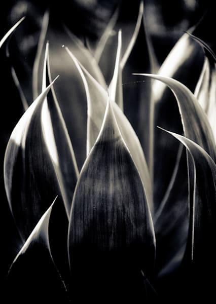 Swords Heavenward Art | Karen Hutton Fine Art