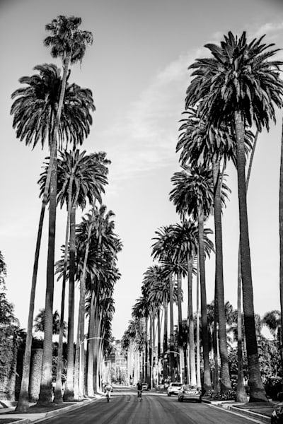 Beverly Hills Palm Trees - bike photo, bike ride - black and white Photo- Los Angeles Print, LA Landmarks, California Wall Art Print, Fine Art Print, cityscape, iconic Los Angeles,