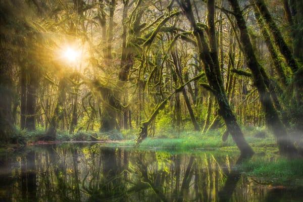 Rainforest Sunshine Photography Art | Charlotte Gibb Photography