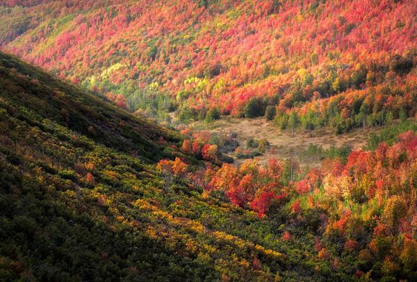 Autumn Wave Photography Art | Charlotte Gibb Photography