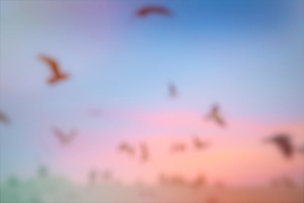abstract colorful modern art photo, birds, blur, sunset, flying, abstract, colorful, Abstract Art, Modern Abstract Photo, Birds at the Ocean, Abstract Wall Art, art print, extra large wall art abstract
