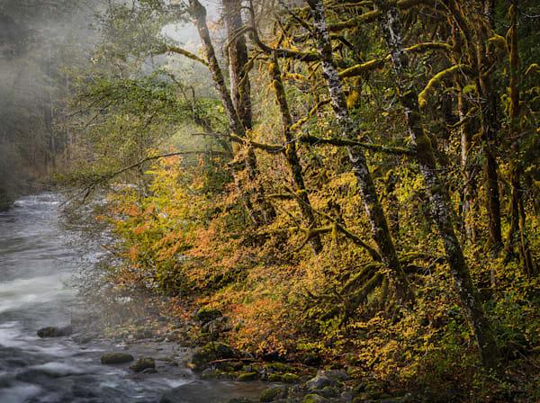 Autumn Lights Photography Art | Charlotte Gibb Photography