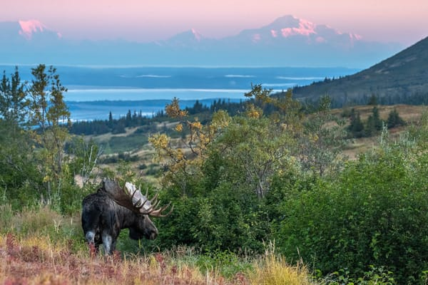 Fall landscape of Bull moose in powerline valley.    Photo by Jeff Schultz/SchultzPhoto.com  (C) 2018  ALL RIGHTS RESERVED