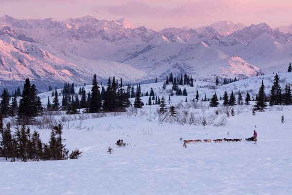 DeeDee Jonrowe mushes her dog team during a spring training run at dawn with Mt. Mckinley and the Alaska Range in the background.  Denali State park.  Southcentral, Alaska  PHOTO (C) BY JEFF SCHULTZ / ALL RIGHTS RESERVED