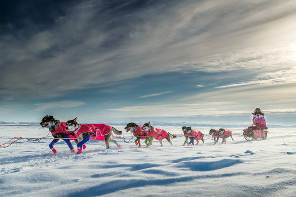 DeeDee Jonrowe runs on the slough just before the Shaktoolik checkpoint on Tuesday March 16, 2015 during Iditarod 2015.    (C) Jeff Schultz/SchultzPhoto.com - ALL RIGHTS RESERVED  DUPLICATION  PROHIBITED  WITHOUT  PERMISSION