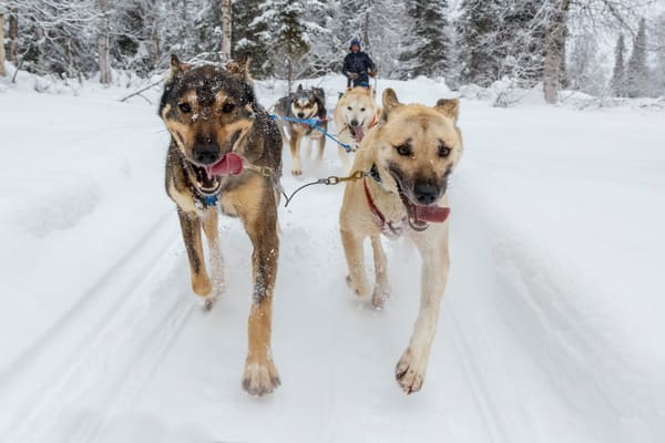 An active, retired senior woman mushes a dog team on the trails at Winterlake Lodge PHOTO (C) BY JEFF SCHULTZ / ALL RIGHTS RESERVED