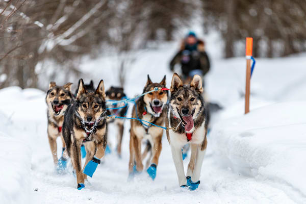 Cody Strathe runs down the trail shortly after leaving the Finger Lake checkpoint during the 2018 Iditarod race on Monday March 05, 2018.   Photo by Jeff Schultz/SchultzPhoto.com  (C) 2018  ALL RIGHTS RESERVED