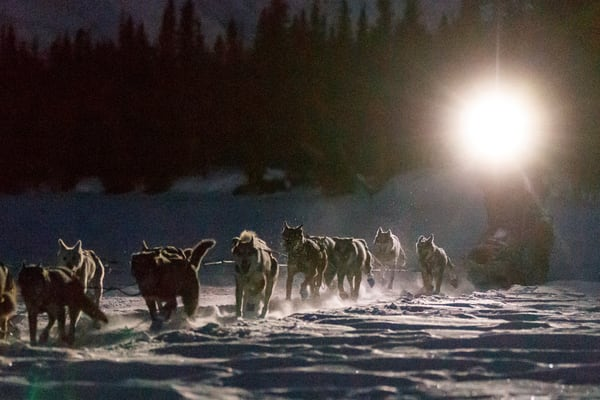 Aaron Burmeister runs by headlamp on the trail in the early morning nearing the Finger Lake checkpoint on Monday, March 4, 2019 during the 2019 Iditarod.  Photo by Jeff Schultz/  (C) 2019  ALL RIGHTS RESERVED