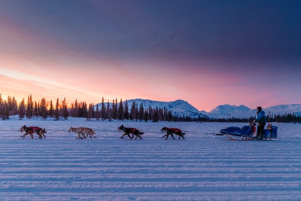 Travis Beals rides into the Finger Lake checkpoint at sunrise in the morning on March 4th during the 2019 Iditarod.  Photo by Jeff Schultz/  (C) 2019  ALL RIGHTS RESERVED