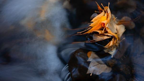 Caught Up In The Swirls Art | Karen Hutton Fine Art