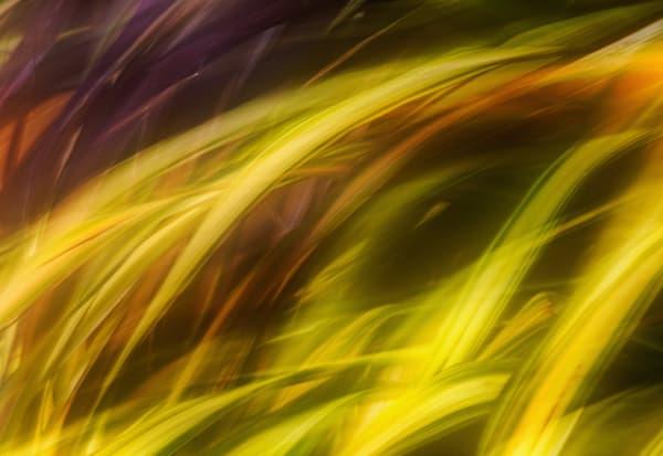 Threads Of Consciousness Art | Karen Hutton Fine Art