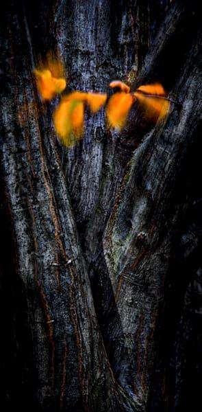 Winded Art | Karen Hutton Fine Art