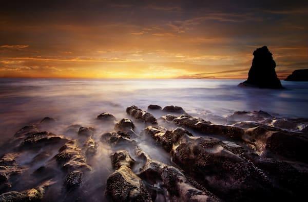 Spine Of The Ocean Art | Karen Hutton Fine Art