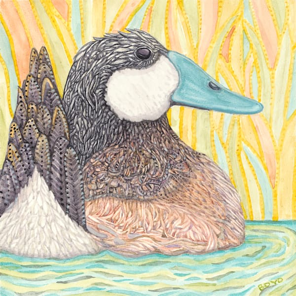 """Prints available of """"Ruddy Duck"""" from Judy Boyd Watercolors"""