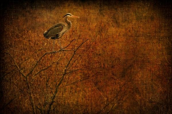 Timeless Heron Home