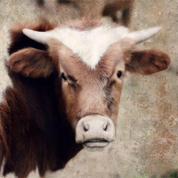 Brown & White Longhorn Calf Art