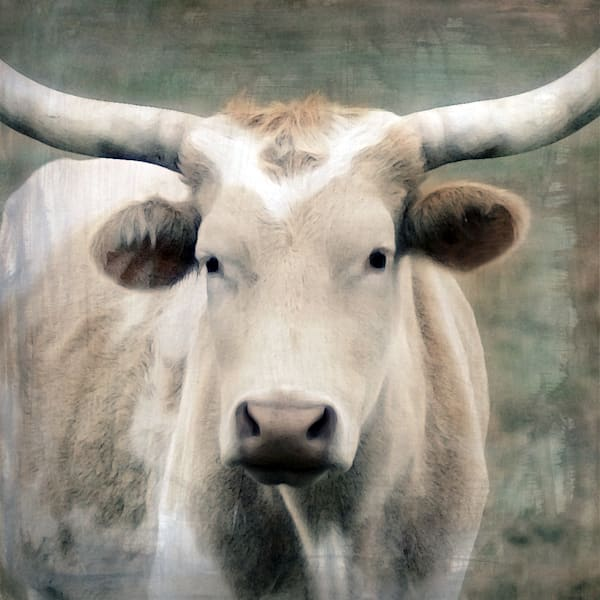Tan & White Longhorn Art