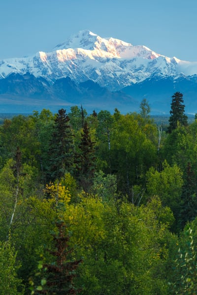 during the Alaska Photo Treks 2015 Denali Photo Workshop in Denali National Park at Camp Denali.  August  Summer