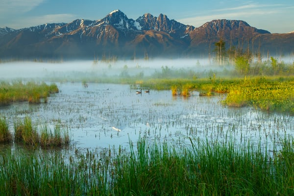 Summer Landscape of Palmer Hayflats Refuge with Canadian Geese and Twin Peaks of Chugach Mountain Range  May  2015    (C) Jeff Schultz/SchultzPhoto.com