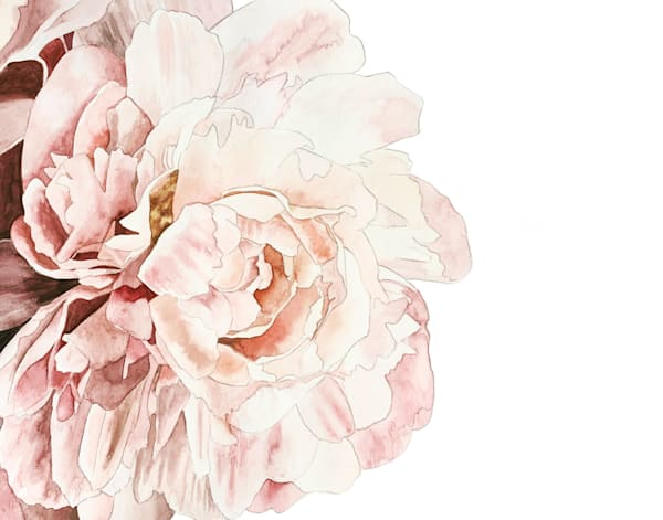 Pink Peony Art   Julie Berthelot