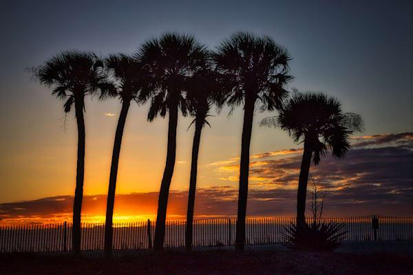 The Palms Photography Art | Willard R Smith Photography