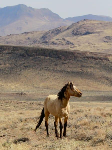 Proud Stallion of High Black Rock