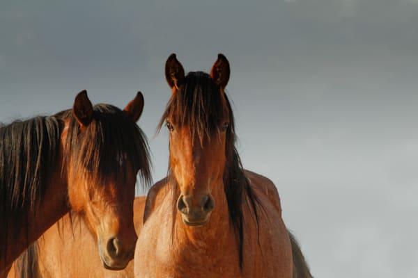 Beautiful Bay Mustangs Soak Up Desert Sun